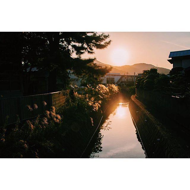 【iris_saito】さんのInstagramをピンしています。 《↟↟秋の気配↟↟ 何気ない日常にも絶景が… #nature #写真  #japan #写真部 #instafollow #followme #写真展 #写真好きな人と繋がりたい #夕日 #sunset #mountains #landscape #travel #山 #自然 #outdoors #instajapan #福井 #高浜 #北陸 #autumn #森林 #秋 #colorful #緑 #forest #フィルム #ススキ #film#紅葉》