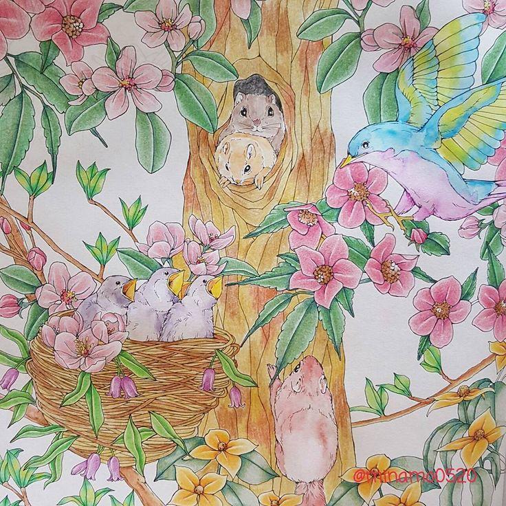 動物たちは水彩、その他は油性色鉛筆で✏ やっぱり鳥の鮮やかさが好き🐦 #幸せのメヌエット #menuetdebonheur #江種鹿乃子 #egusakanoko #大人の塗り絵 #大人のぬりえ #おとなの塗り絵 #おとなのぬりえ #コロリアージュ #カラーリングブック #coloringbook #coloringbookforadult #컬러링 #컬러링북 #색칠놀이 #coloriage #adultcoloringbook