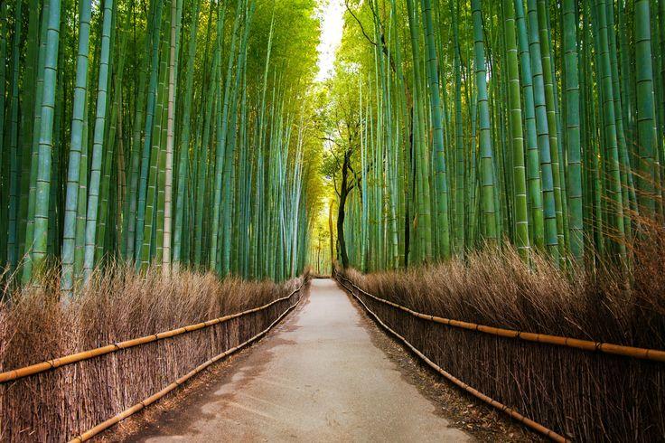 Promenade dans la #forêt de #bambous d'#Arashiyama au #Japon à #Kyoto #TripInsolite #Travel #Insolite #voyage #Japan #nature