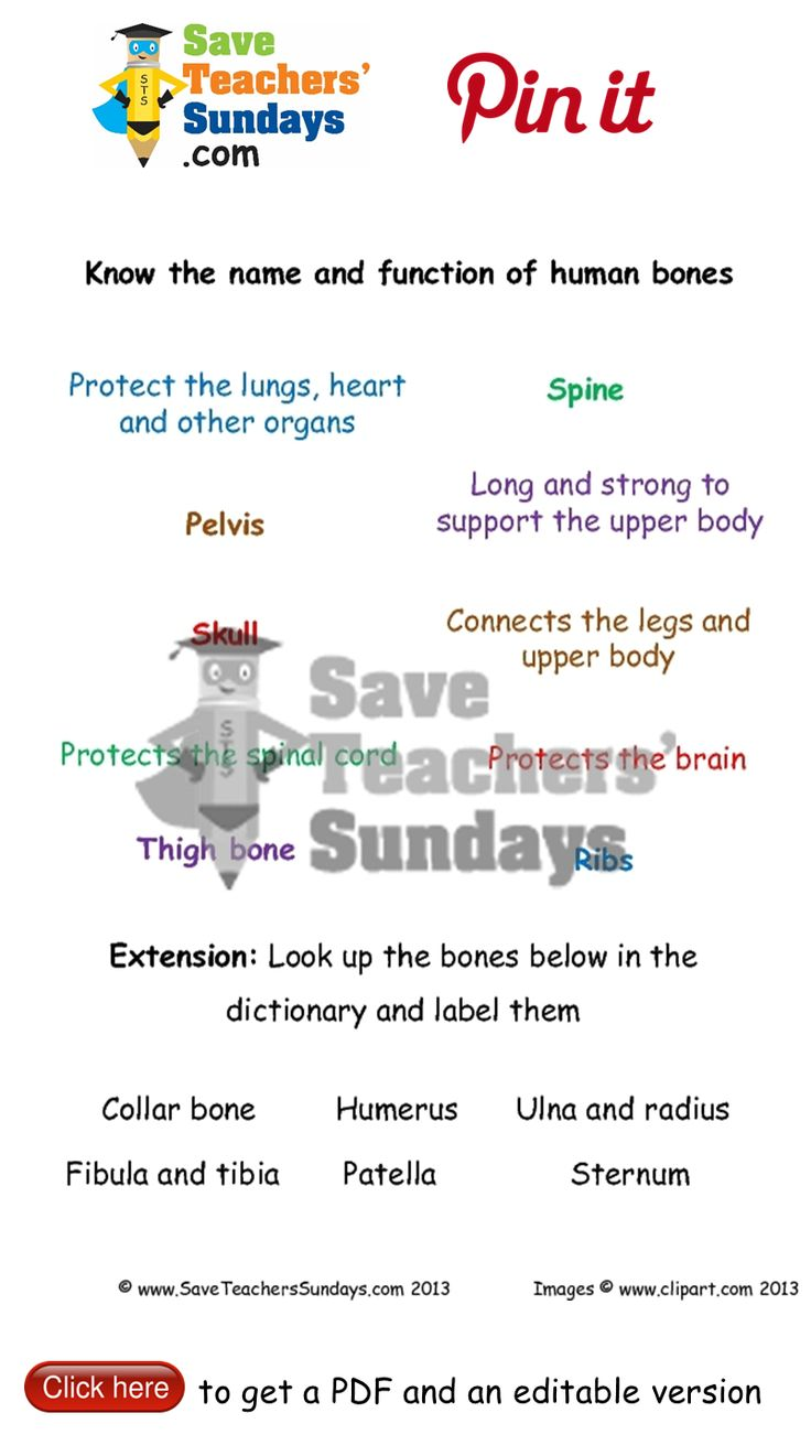 Human skeleton label the bones. Go to http://www.saveteacherssundays.com/science/year-3/327/lesson-5-human-skeleton/ to download this Human skeleton label the bones. #SaveTeachersSundaysUK