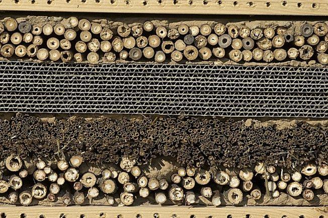 Les 24 meilleures images du tableau chrysope sur pinterest insectes insectes utiles et - Maison a insectes fabrication ...