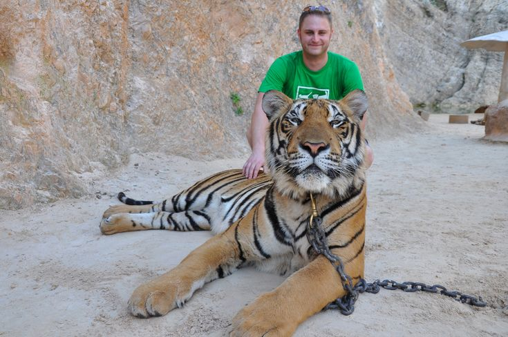 "7 reasons to think twice before visiting Thailand's ""Tiger Temple"""