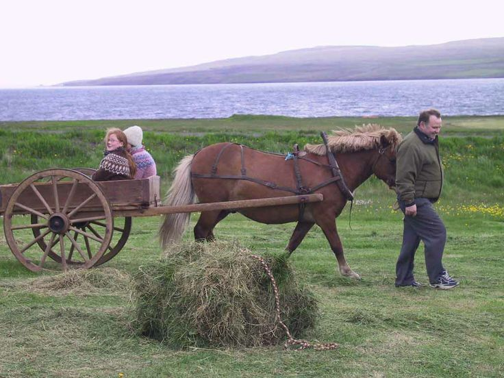 Animals Pulling Wagon : Horse pulling a cart pixshark images galleries