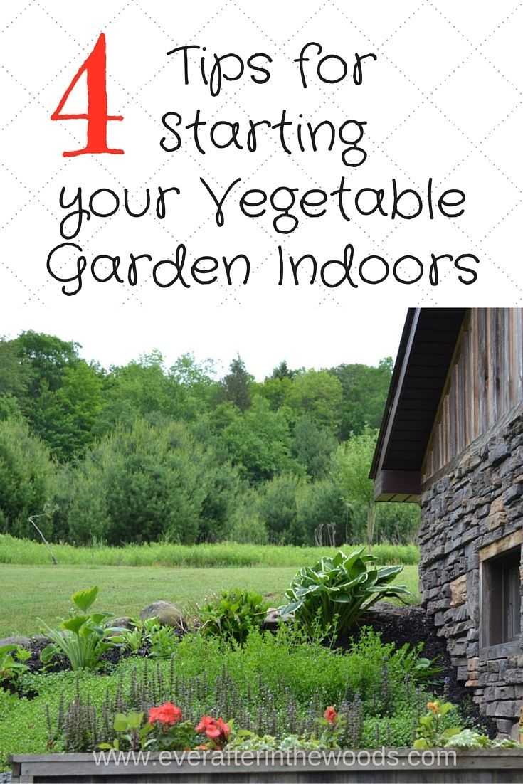 76 best vegetable gardening images on pinterest gardening growing 4 tips for starting your vegetable plants indoors growing vegetablesvegetables gardengarden workwithnaturefo