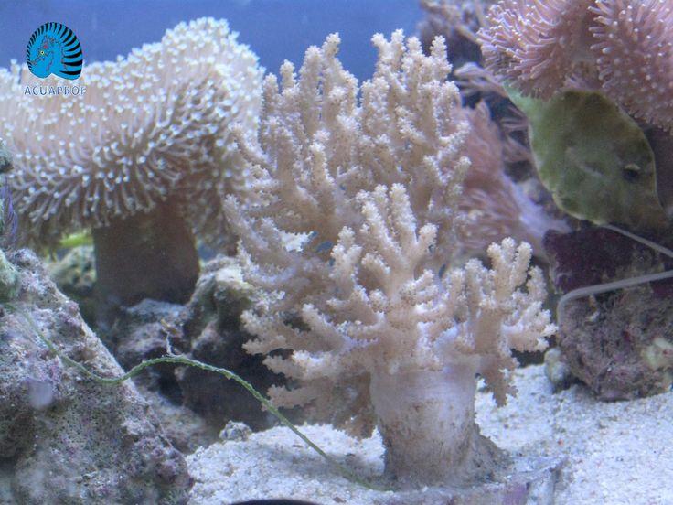corales blandos - Buscar con Google