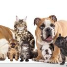 Choosing Pet Airlines or a Pet Transportation Service