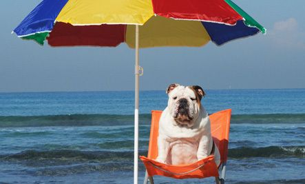 5 Sun Safety Tips for Dogs