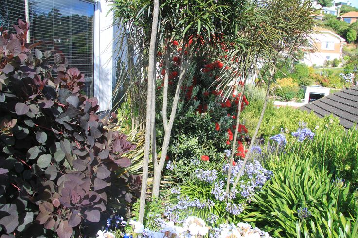 Bursts of colourful foliage and flowers bring this garden to life.