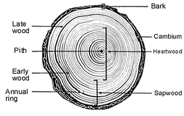 graph  cross section tree