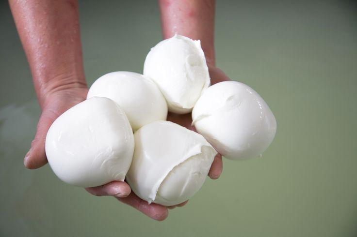 MOZZARELLA DI BUFALA CAMPANA D.O.P. Formaggio grasso, fresco, a pasta filata. Prodotto principalmente in Campania, ma anche nel Lazio, in Molise e in Puglia, con latte di bufala mediterranea italiana. E' un formaggio a pasta filata da consumare fresco o accompagnato da prodotti della terra del sud italiano. È apprezzato e consumato da coloro che amano l'aroma semplice del latte e dello yogurt. Ingrediente di molte ricette italiane, la Mozzarella di bufala campana è conosciuta in tutto il…