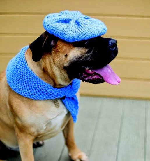If you LOVE Paris in the springtime, #knit your #dog this #beret!  Source - Outrageously Adorable Dog Knits