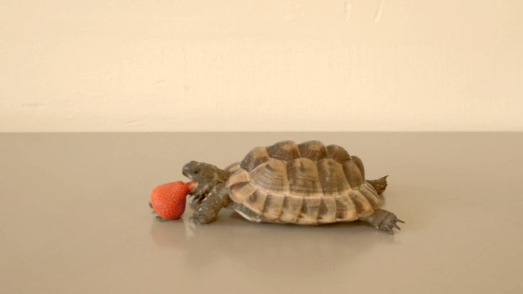 Alan Rickman Narrates Video About a Tortoise Slowly Consuming a Strawberry for a Good Cause
