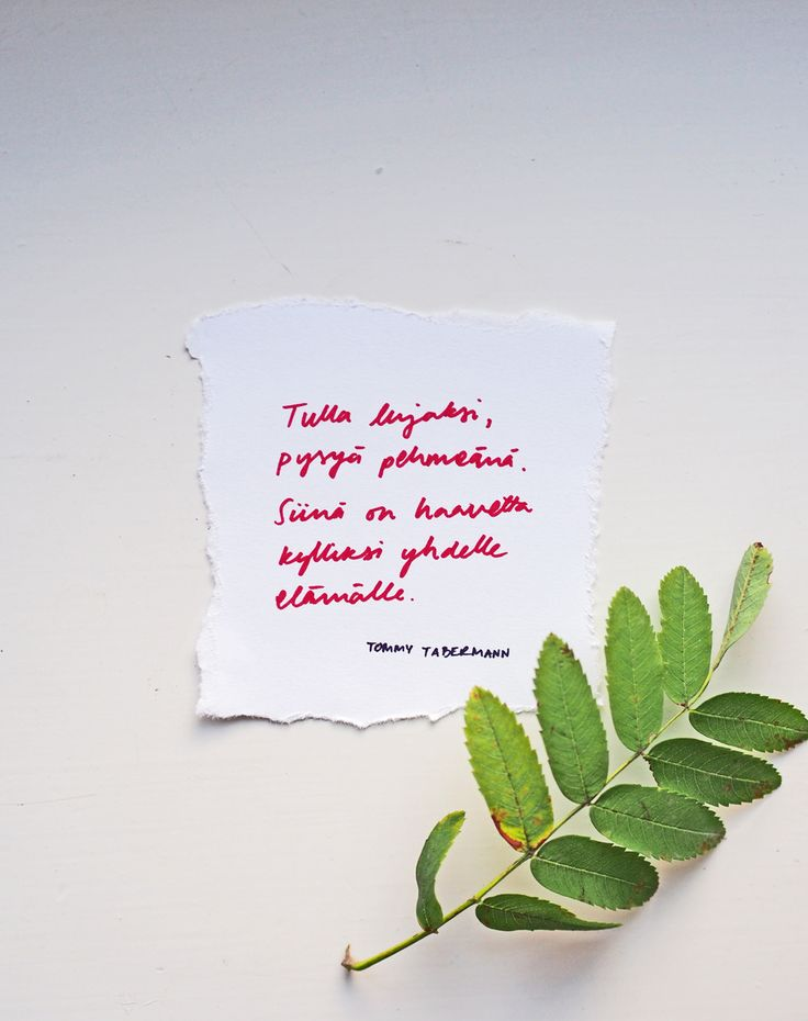 Tommy Tabermann <3 | Pupulandia