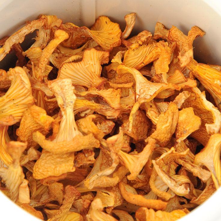 20120806-_dsc7093.jpg (1000×1000) kuivatut kanttarellit ja muut sienet kuten suppikset <3 suolasienetkin käy jos laitat käyttöohjeen mukaan.
