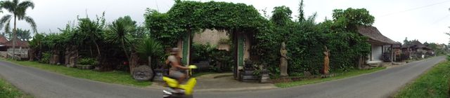 I love this image of a motorbike zipping past our front gate in Bali. Such a contrast to the softness of the greenery that has grown over the last 12 years. A taste of the Bali gardens inside the gates.