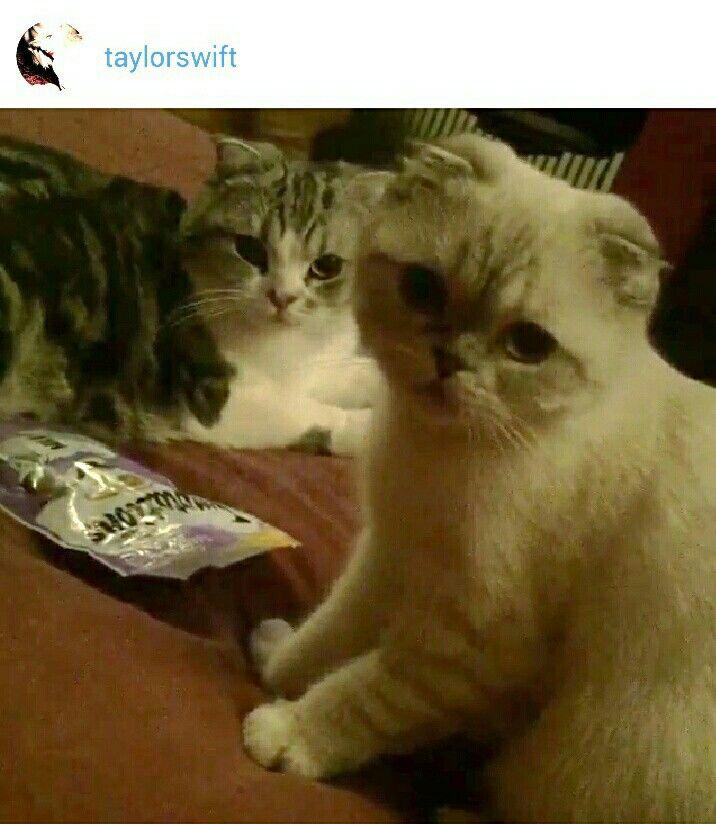 Olivia Benson~Swift & Meredith Cool Cat's