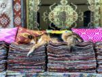 Tourists and Locals Alike Can Help Strays in Istanbul with TOI
