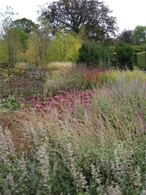 113 best ideas about piet oudolf on pinterest gardens for Piet oudolf favorite plants