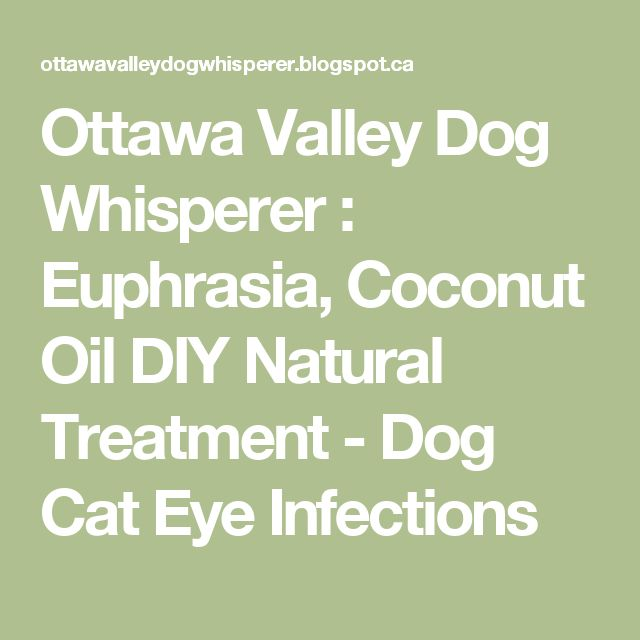 Ottawa Valley Dog Whisperer : Euphrasia, Coconut Oil DIY Natural Treatment - Dog Cat Eye Infections