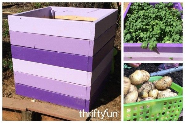 Save gardening space and grow tons of potatoes by building this stackable potato planter. This page gives you step by step instructions to make a stackable potato planter.