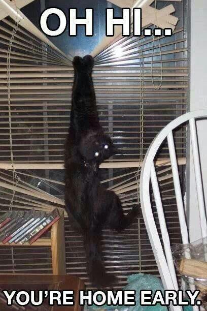 25 lustige Katzen Bilder – lustige Katze Zitate #funnycat #catquotes #cats   – lol#3