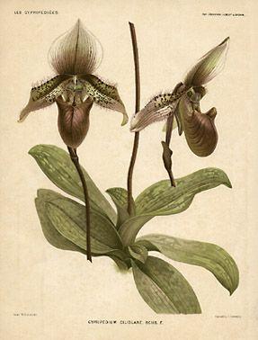 Vintage orchid print.