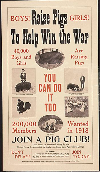 World War 1 poster. Hey , i want to join a pig club!