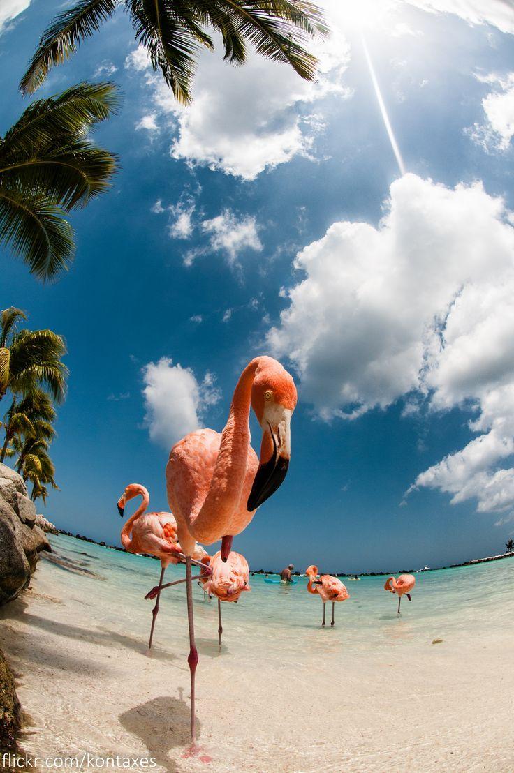 Renaissance Insel, Aruba Entspannen mit den pinken Flamingos der Insel. Den pass… – Nadine J. 🐖