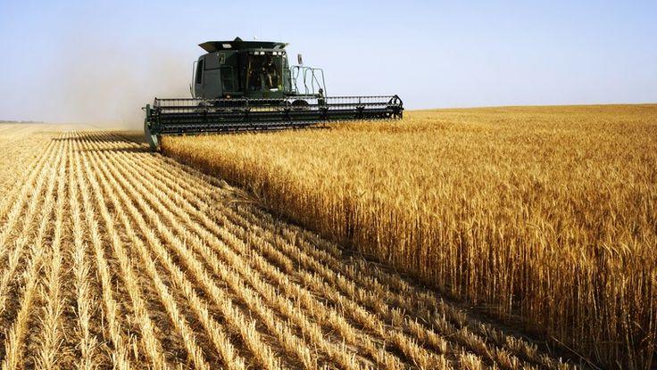 Em compensação, a produção de cevada foi estimada 3% maior na comparação com a safra anterior