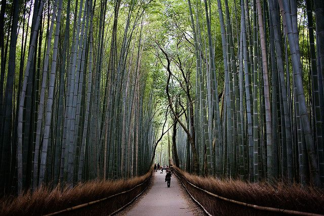 JAPAN: beautiful bamboo forest in Kyoto.