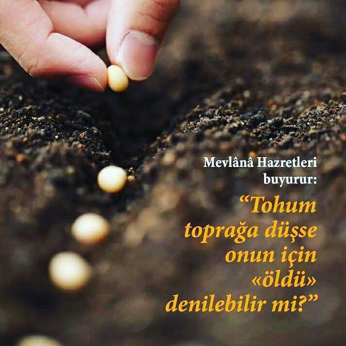 #tohum #toprak #hata #hzmevlana #mevlana #mevlanacelaleddinrumi #mevlanahz #söz #sözler #türkiye #istanbul #rize #ilmisuffa
