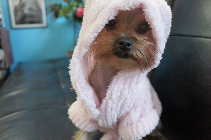 I'm clean mommy!......OMG.....LOOK AT THAT FACE........DON'T YOU JUST WANNA HUG THIS PUPPY TO DEATH..