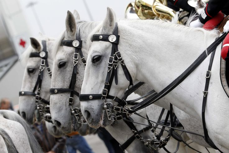 #horses #horse #cavalli #fieracavalli