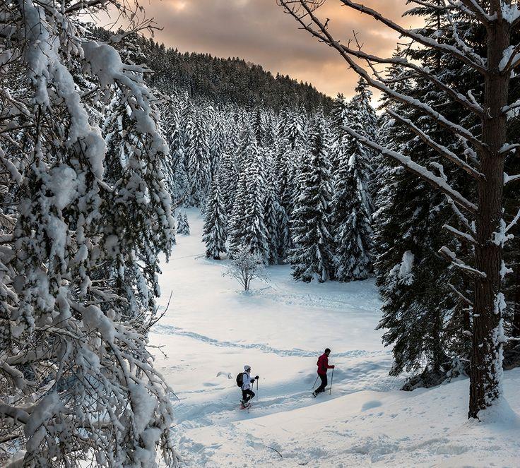 #Ciaspole in @valdinon la patria naturale delle escusioni con le racchette da #neve qui in @visittrentino