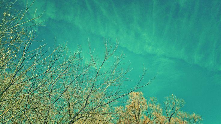 the tree line and blue sky - thetemenosjournal.com