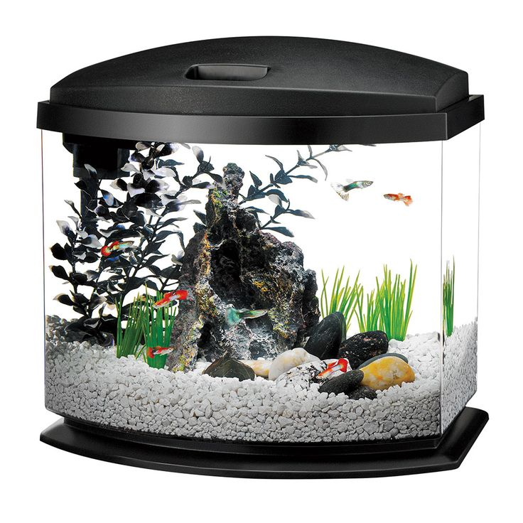 Image gallery home aquarium supplies for Saltwater fish tank kit