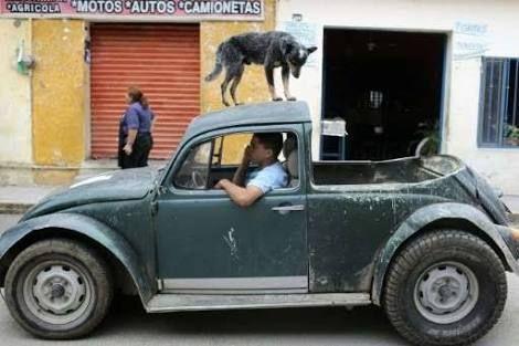 Image result for volkswagen beetle classic 2003
