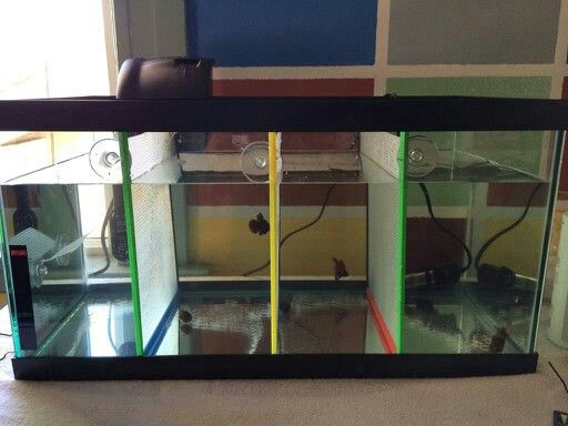 Super simple (and cheap!) fish tank dividers