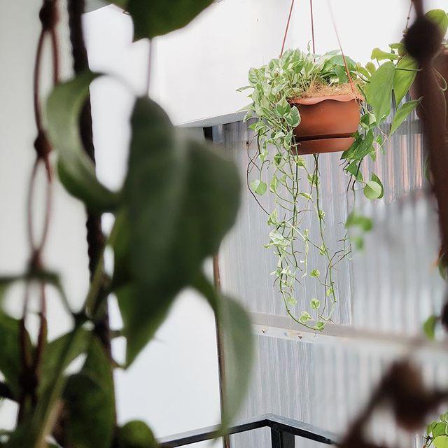 Bosen Dengan Tanaman Gantung Itu2 Aja Coba Campur Dengan Varian Lain Jadi Bisa Main Tekstur Plantstylingtips Shopwithsky Client Sanastudio Plants Pot