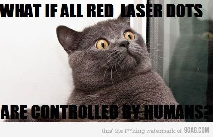 Conspiracy Cat#Repin By:Pinterest++ for iPad#