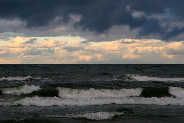 Na Mierzei Wiślanej znajduje się największa w Europie ostojakormorana czarnego. Rezerwatprzyrody Kąty Rybackieczęściowoprzypomina las po katastrofie. Przyczyną tego jest intensywne 'nawożenie' ptasim nawozem. Bywały lata gdy kolonia liczyła ponad 10 tysięcy ptasich gniazd. W okres…