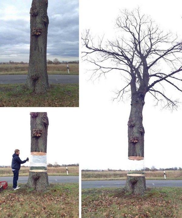 Peek-a-boo tree by street artists Daniel Siering and Mario Shu in Potsdam, Germany.