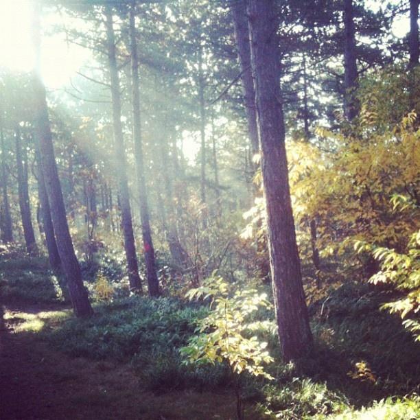Bos bij De Koog