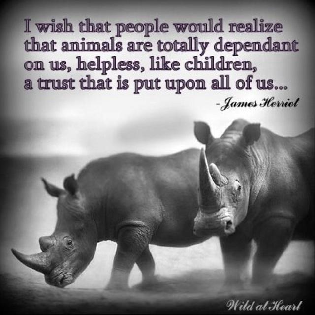 Stop rhino poaching | I love all animals | Nick brandt ...