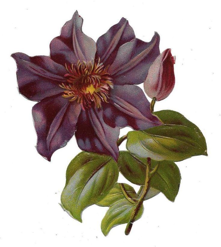 Victorian Die Cut Scrap Embossed Purple Clematis Jackmanii ca. 1880s: