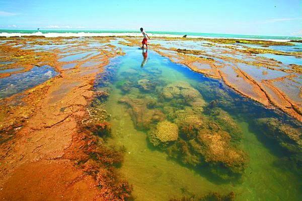BEAUTIFULL Coral Shown in Takabonerate