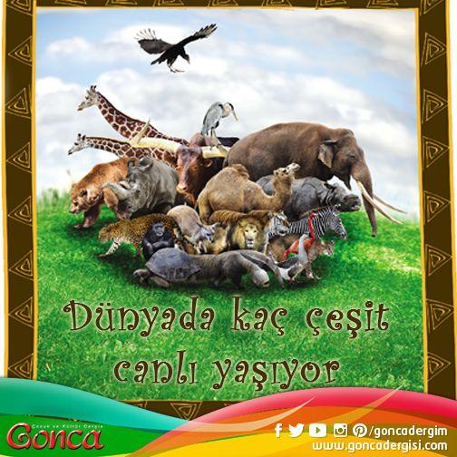 Dünya üzerinde kaç çeşit hayvan bulunduğunu bilen var mı?  Tahminler, 20 ile 100 milyon arasında değişiyor. #dunya #hayvan #cesit #tur #family #goncadergim #cocukdergisi #kulturdergileri #bilgi #kultur #eglence #hayvanlaralemi