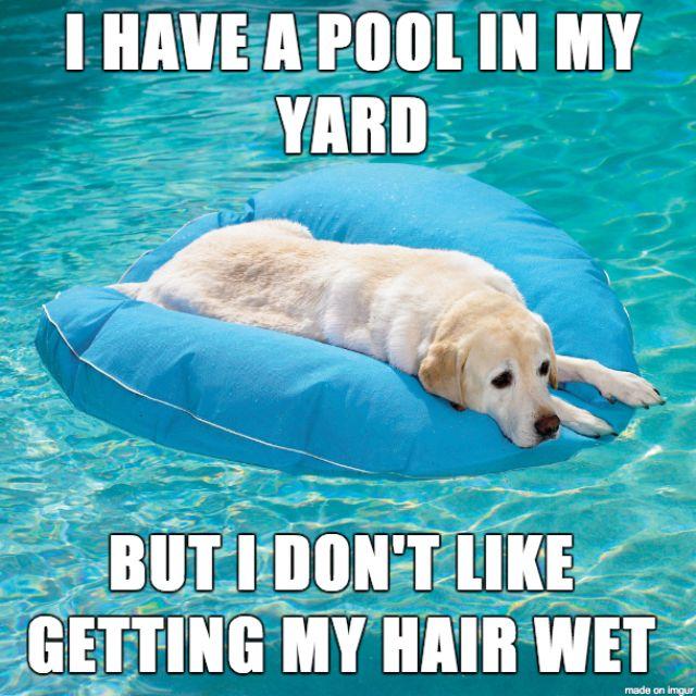 Best Dog Memes Images On Pinterest Dog Memes Adorable - 17 memes youd definitely send your dog if you could