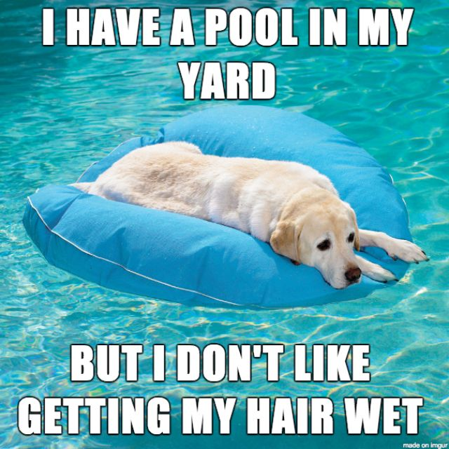Image result for dogs swimming meme