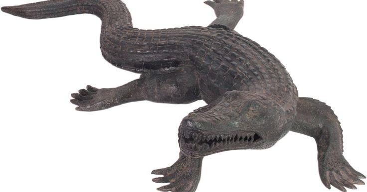 """Descripción de un cocodrilo. El término """"cocodrilo"""" se deriva de la frase en español """"el lagarto"""", que significa """"el caimán"""". El cocodrilo está estrechamente relacionado con el caimán, pero algunas diferencias muy marcadas definen cada especie. Sólo dos especies de cocodrilo existen en el mundo entero: el cocodrilo americano y el cocodrilo chino. El cocodrilo americano se ..."""